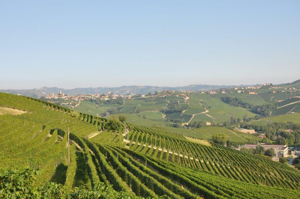 Sfeer Barolo Langhe wijngaarden